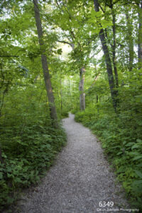 landscape forest trail green trees path