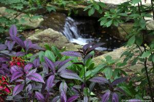 landscape grasses water flowing rocks garden purple