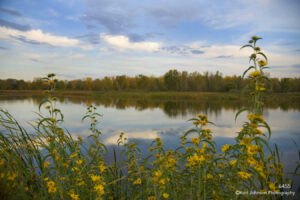 waterscape landscape flowers grasses fall river water clouds yellow blue