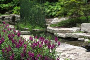 landscape waterscape stream flowers purple rocks green grasses garden