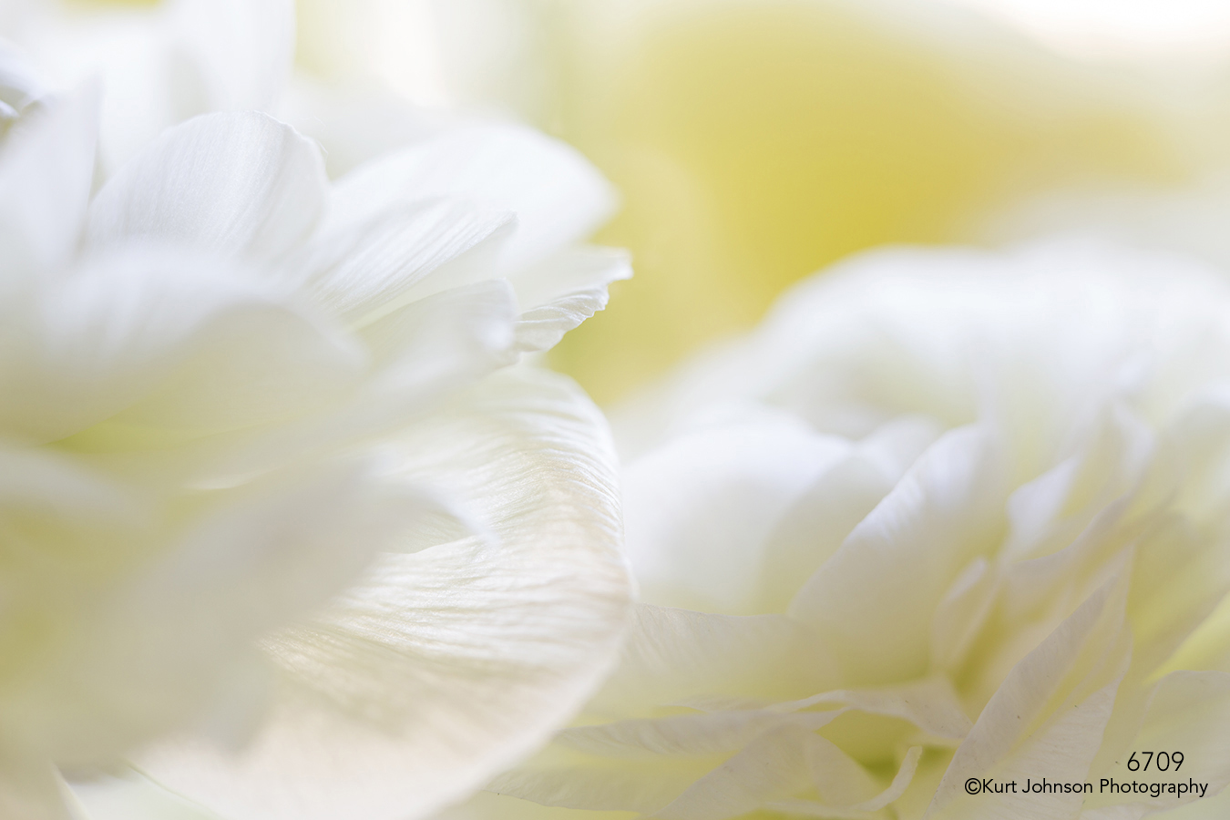 flower petals white abstract texture details close up