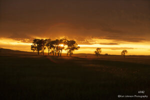 landscape trees sunset orange silhouette