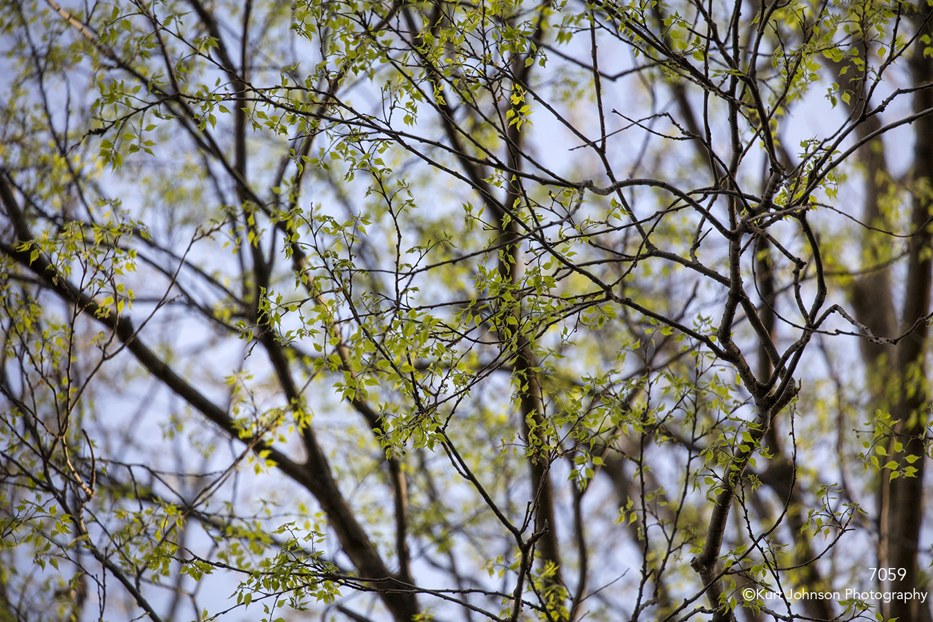trees green branches leaves