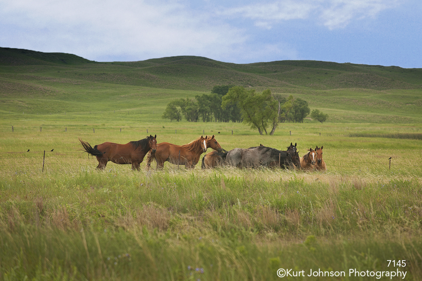 landscape field horses wildlife midwest