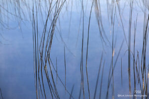 waterscape grasses water blue