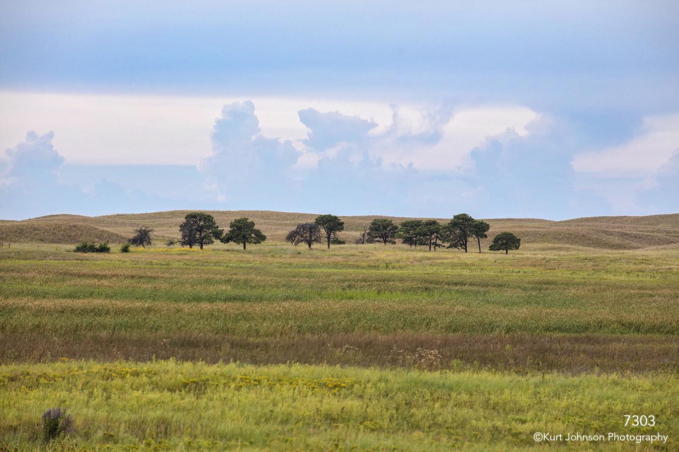 landscape grasses trees clouds