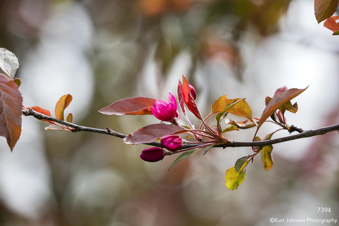 flower tree branch leaves bud blooming pink earth tones