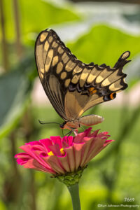 wildlife butterfly flower pink