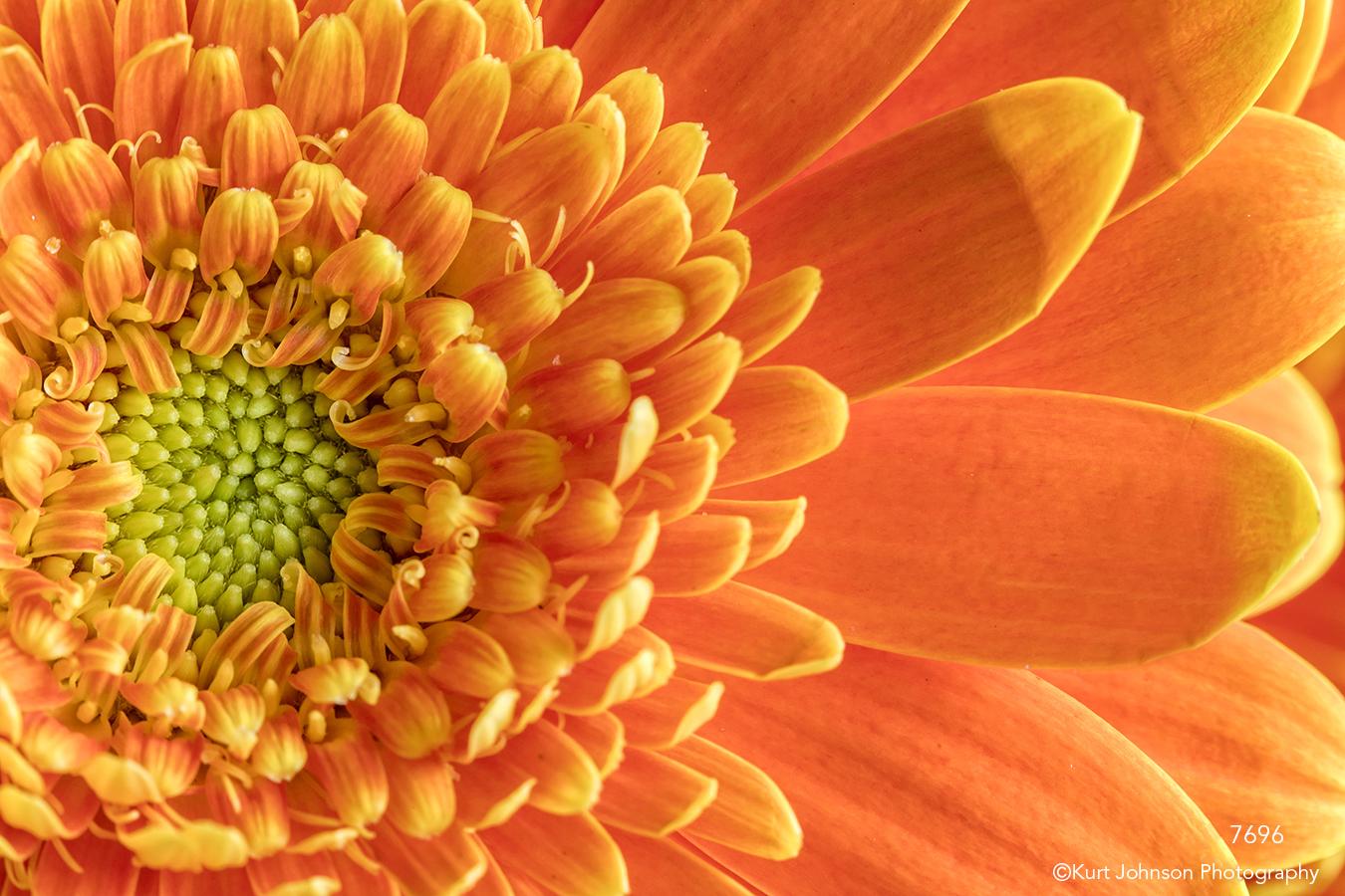 flower orange close up details petals daisy texture