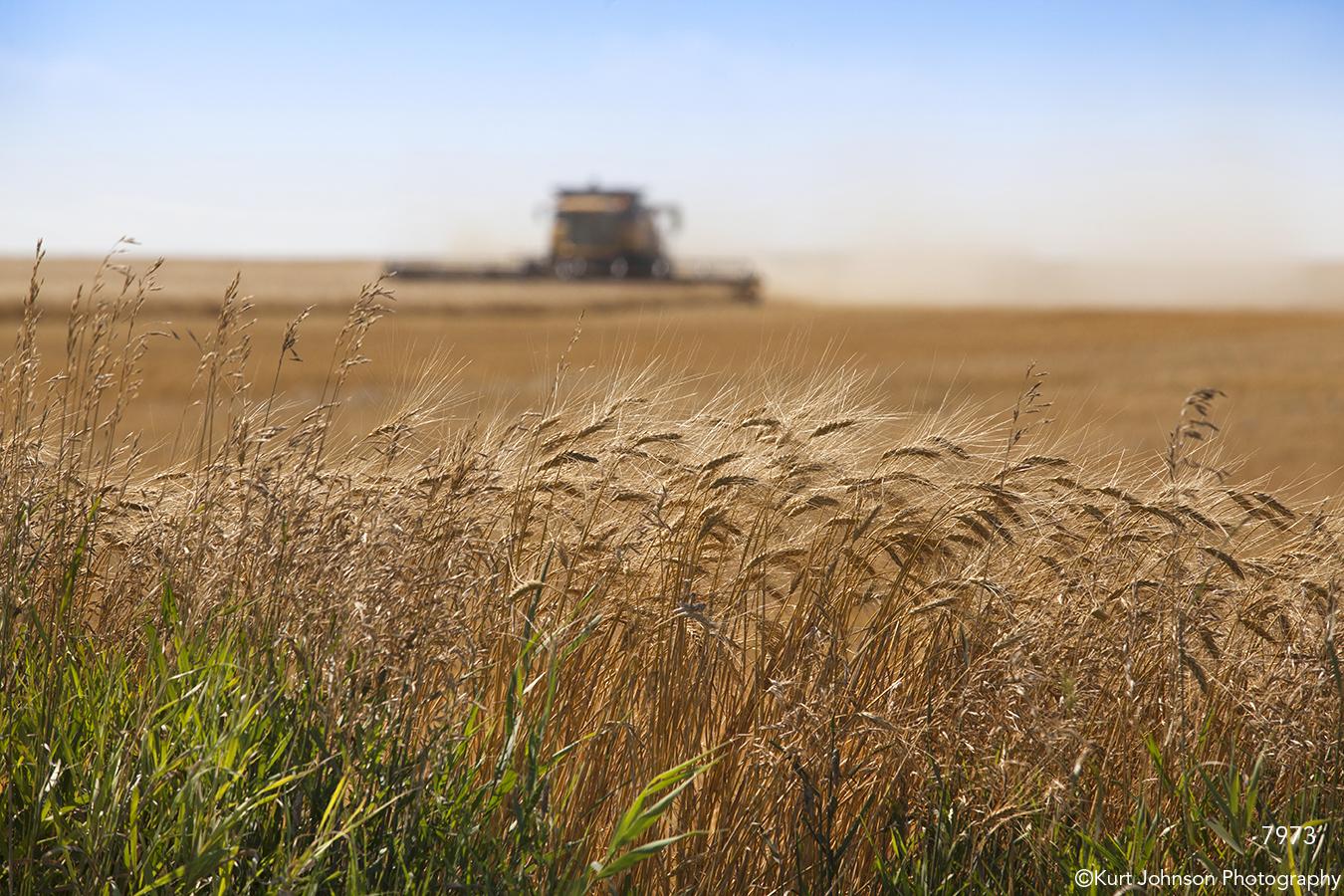 landscape grasses harvest rural farm wheat earthtones brown