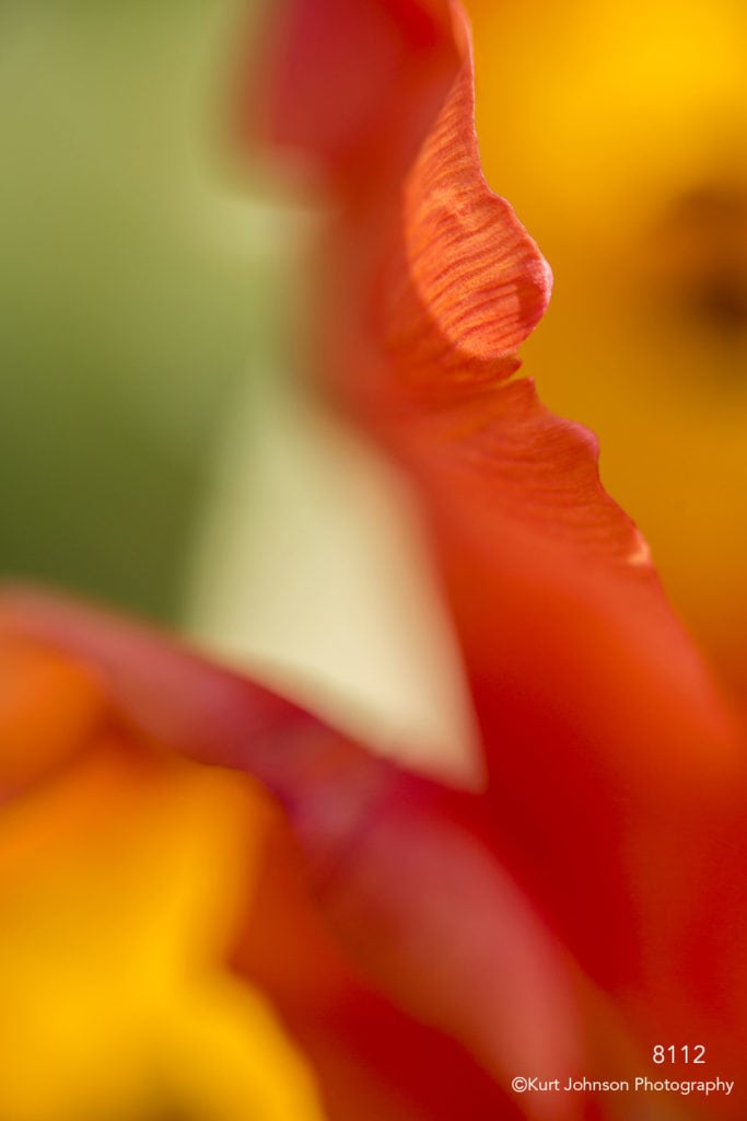 flower petals tulip texture detail close up abstract orange red
