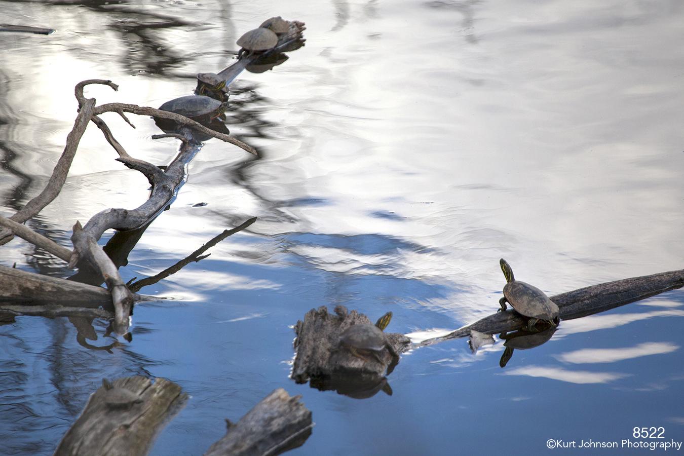 waterscape water wildlife turtles blue