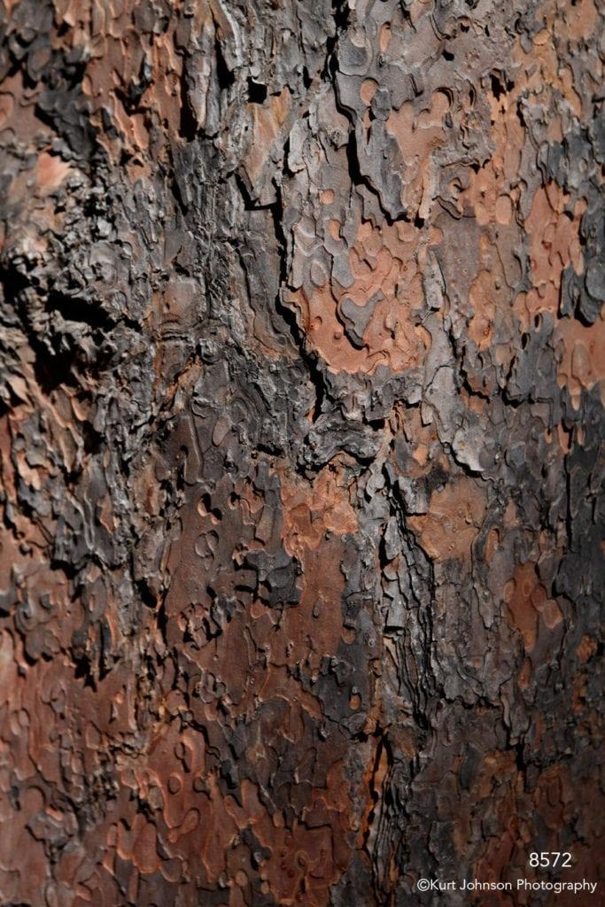 texture wood close up brown earth tones tree bark