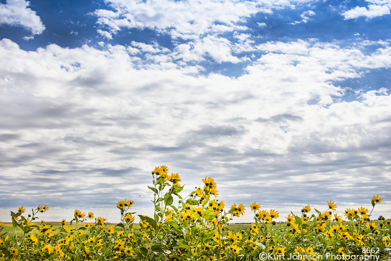 landscape clouds flowers yellow