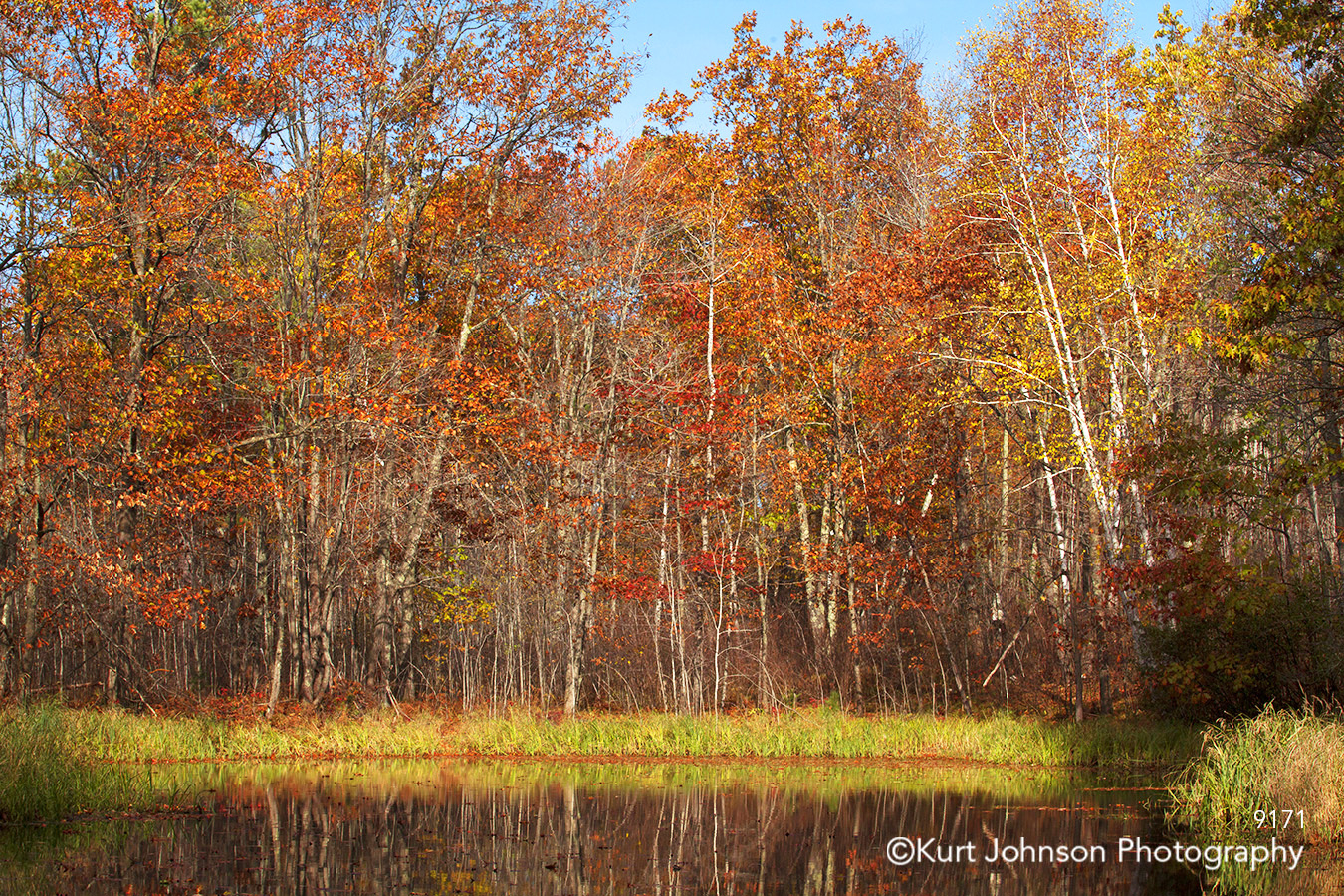 landscape trees water pond fall color birch red orange minnesota grasses