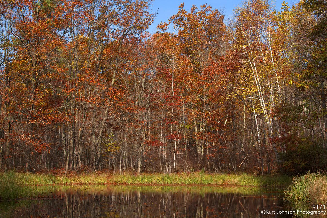 landscape trees water pond fall color birch red orange minnesota grasses