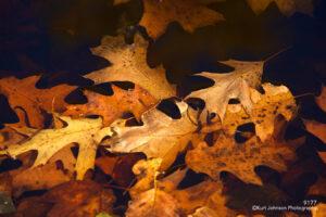 waterscape water leaves leaf orange floating