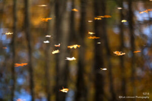 waterscape water leaves leaf orange floating reflections pond