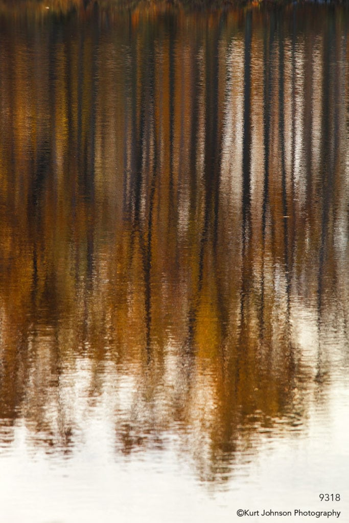 waterscape orange trees reflections water