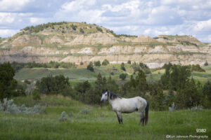 landscape wildlife horse mounts mountains green grasses clouds dakota