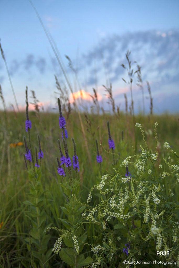 landscape sunset flowers purple white blue sky grasses