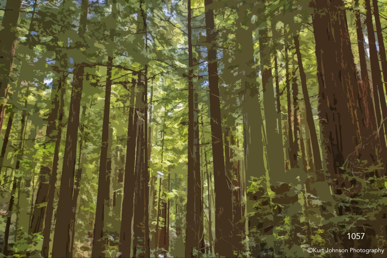 filter interpretations interpretation forest trees cutout abstract green