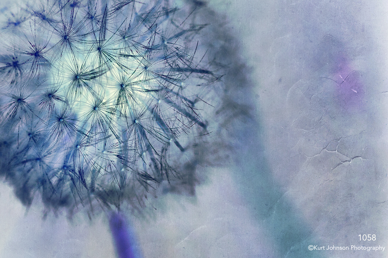filter interpretations interpretation flowers blue purple texture details