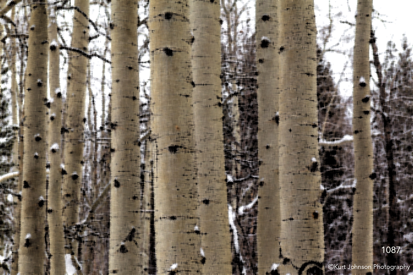 interpretations interpretation filter forest trunks trees birch snow winter brown