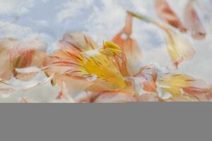 interpretations interpretation filter texture orange flower petals clouds flowers water