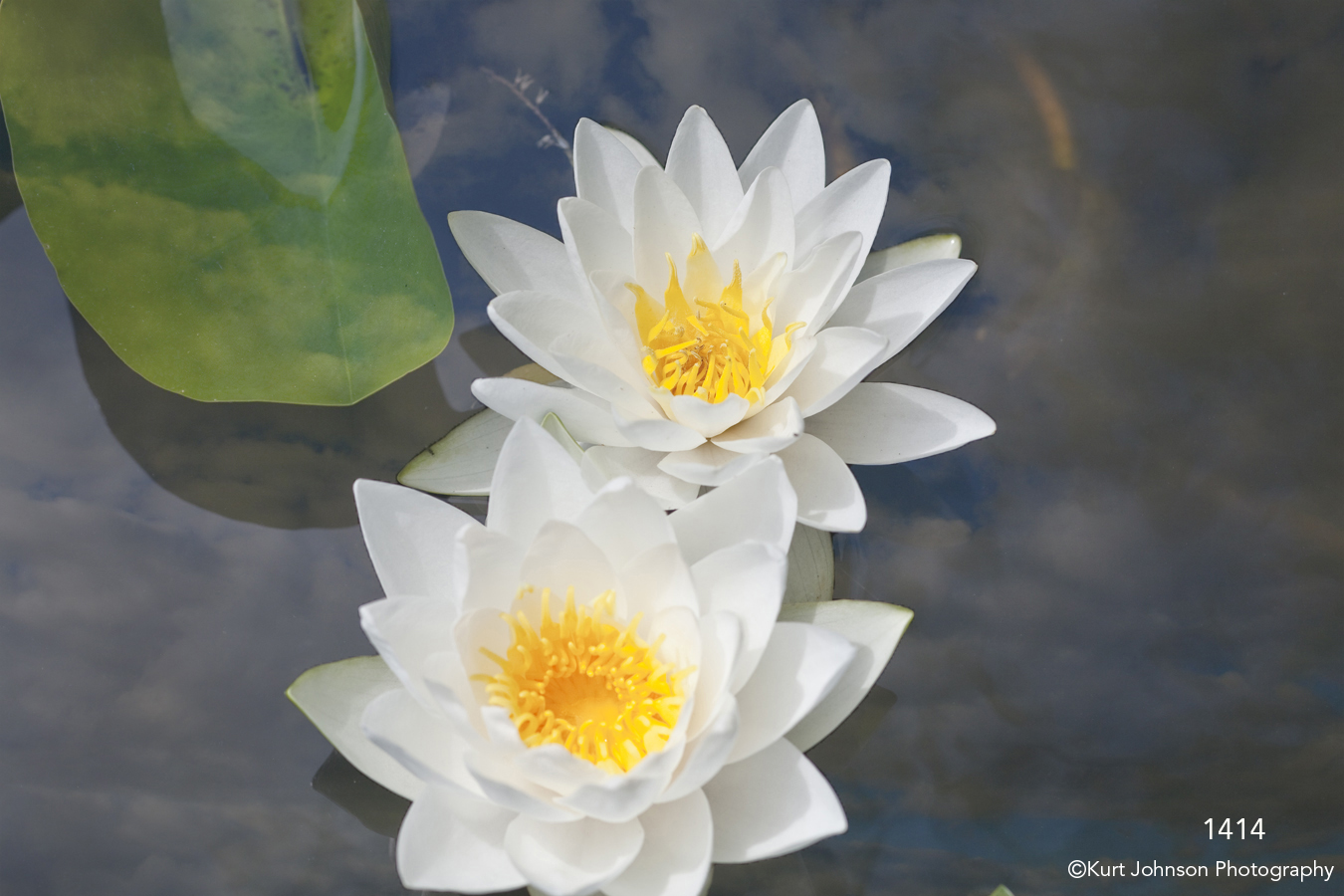 interpretations interpretation filter clouds white flower lily leaf flowers water
