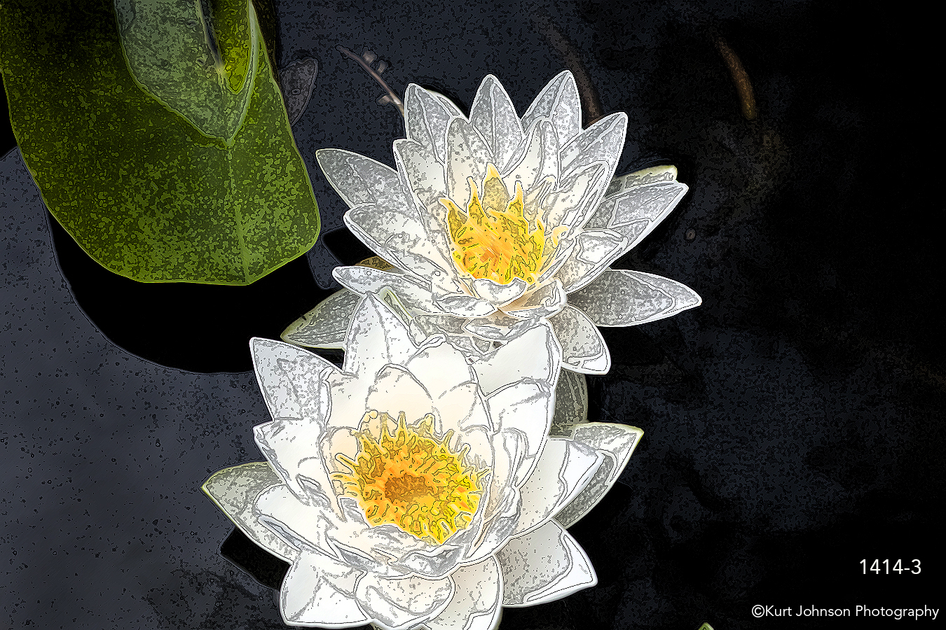 interpretations interpretation filter texture ink outlines white flower lily leaf flowers water