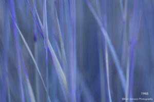 interpretations interpretation filter katy grasses grass blue purple