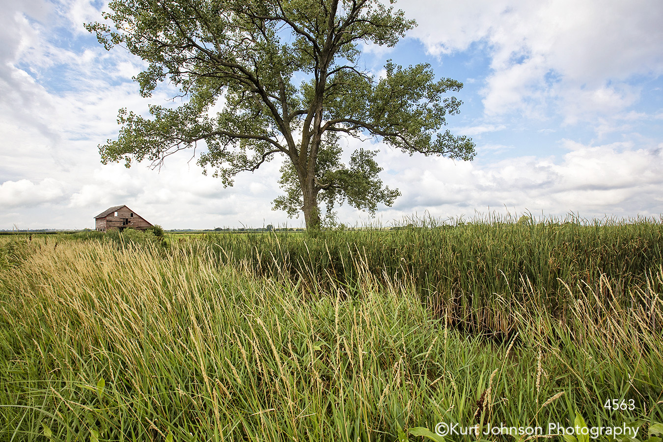 landscape grasses green tree clouds barn rural midwest