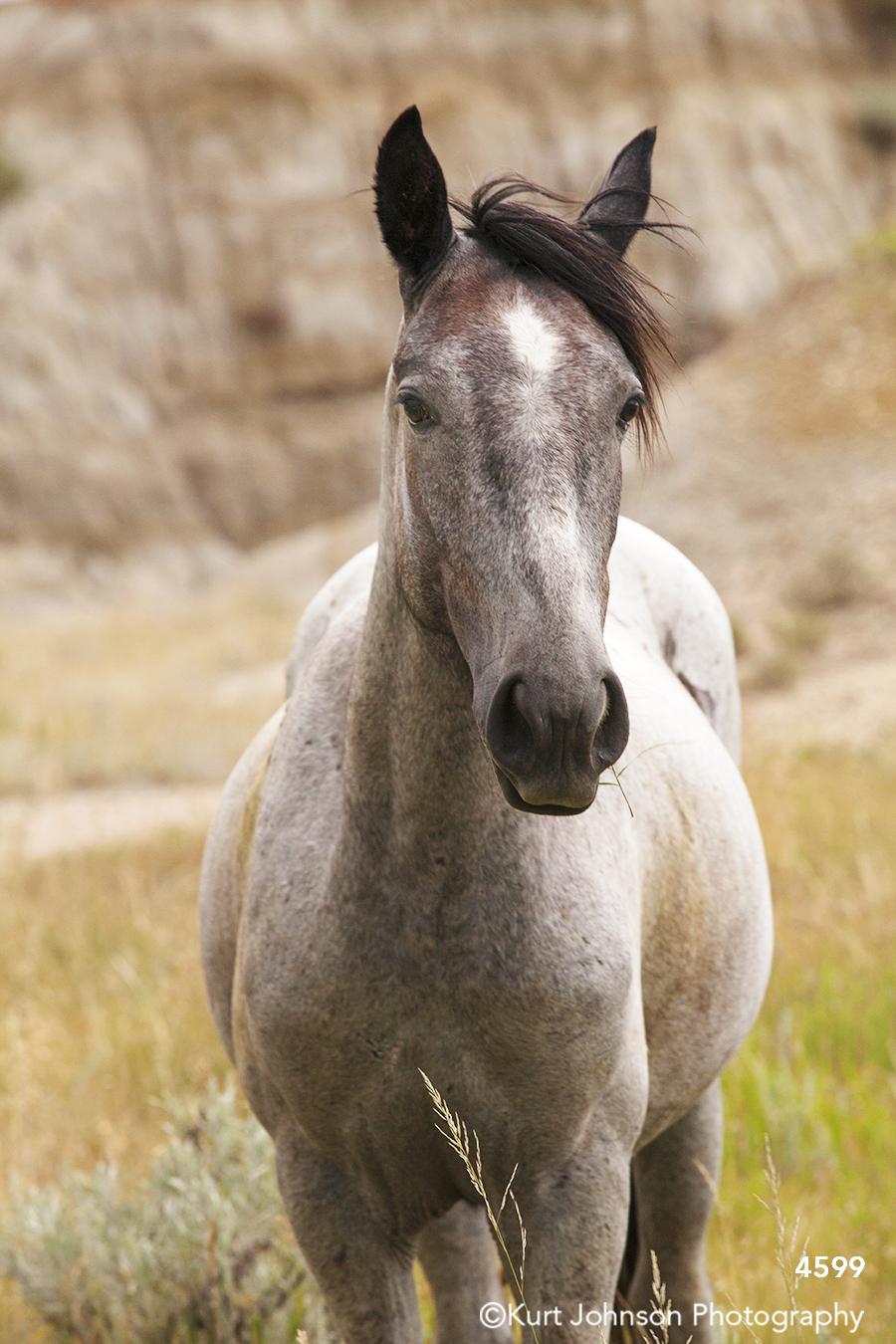 wildlife horse