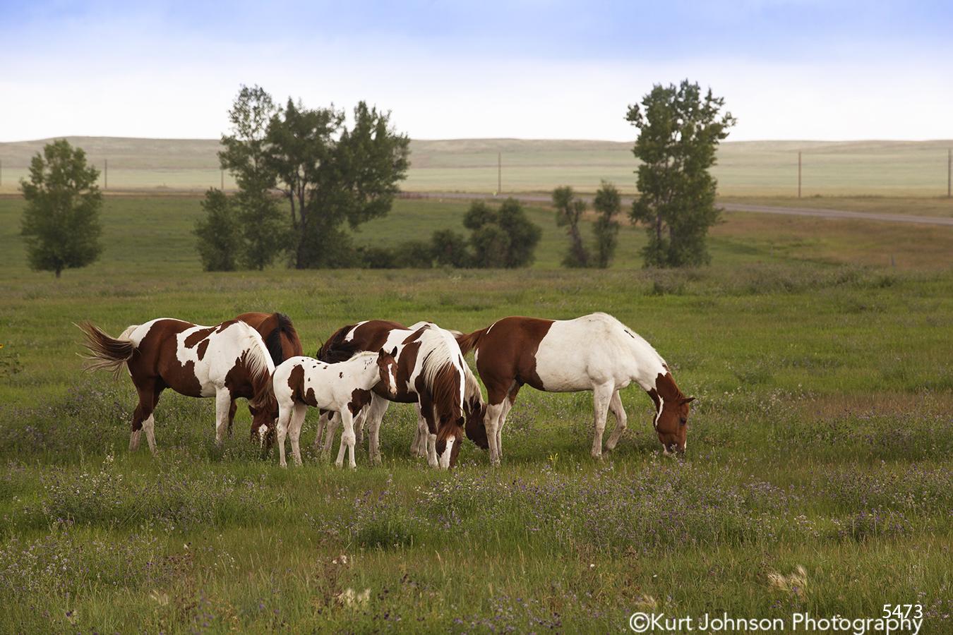 wildlife horses rural landscape grasses horse
