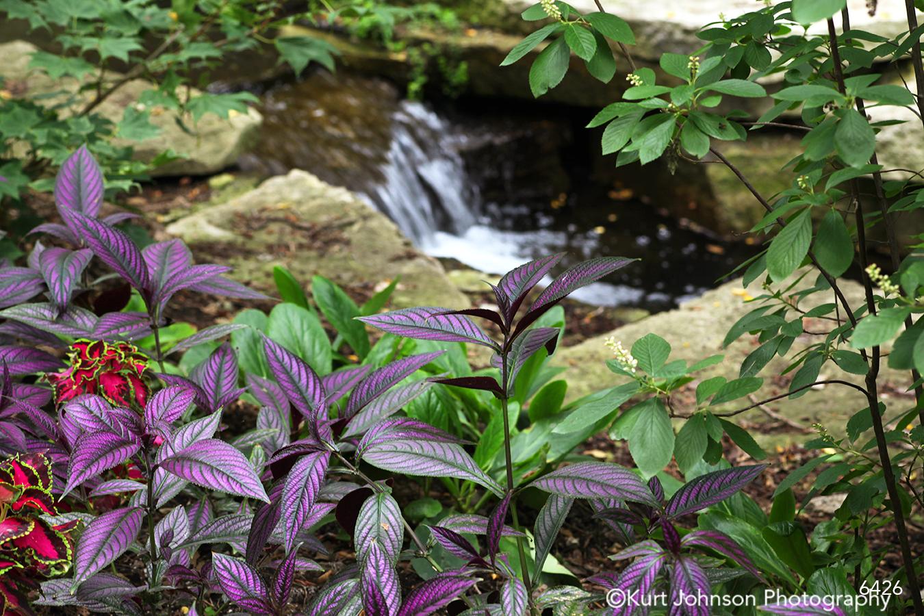 purple green leaves waterfall rock rocks water waterscape
