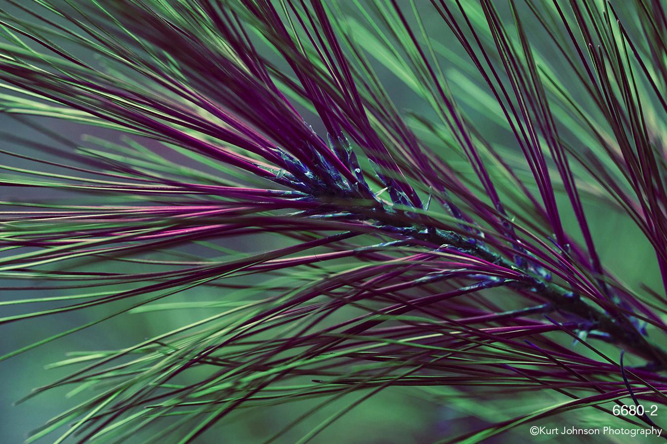interpretations interpretation purple filter green pine needles leaves closeup