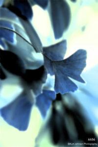 interpretations interpretation filter blue leaves ginko close up detail leaf