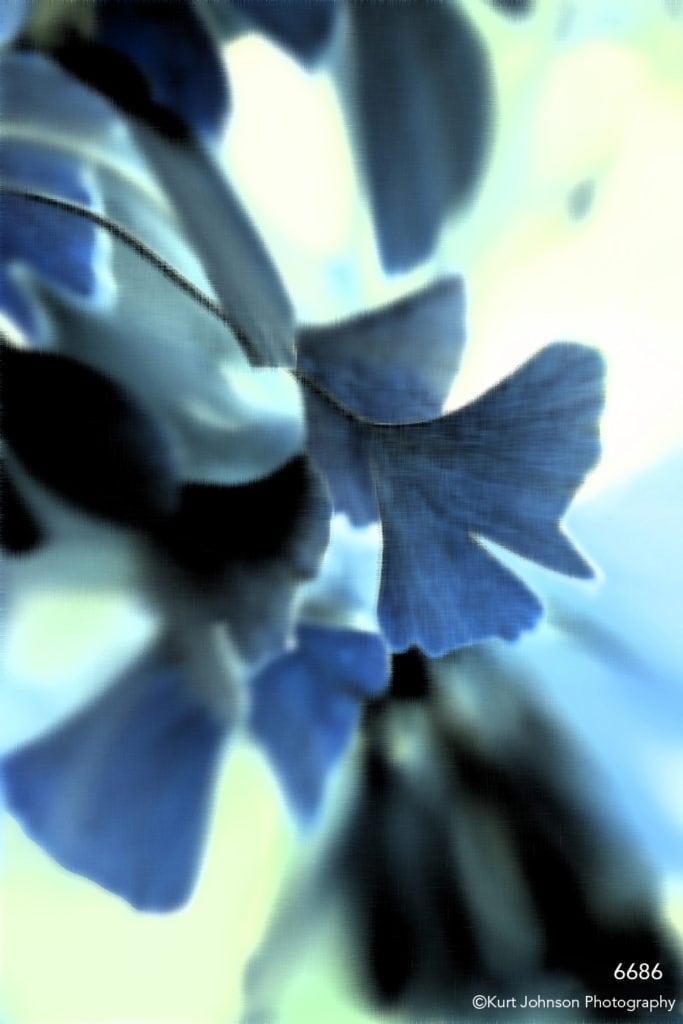interpretations interpretation filter blue leaves ginko close up detail leaf