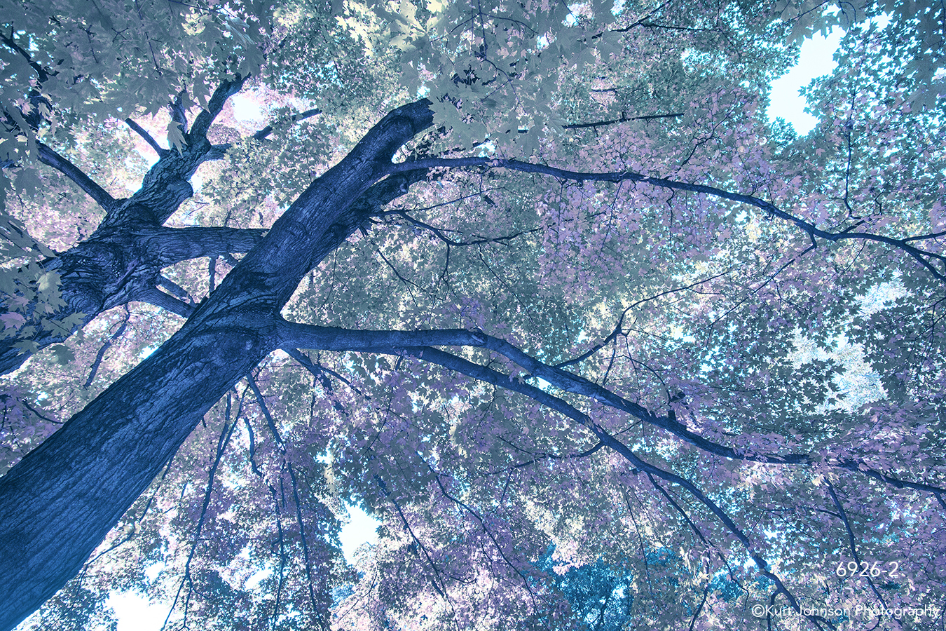 interpretations interpretation filter tree leaves purple blue abstract