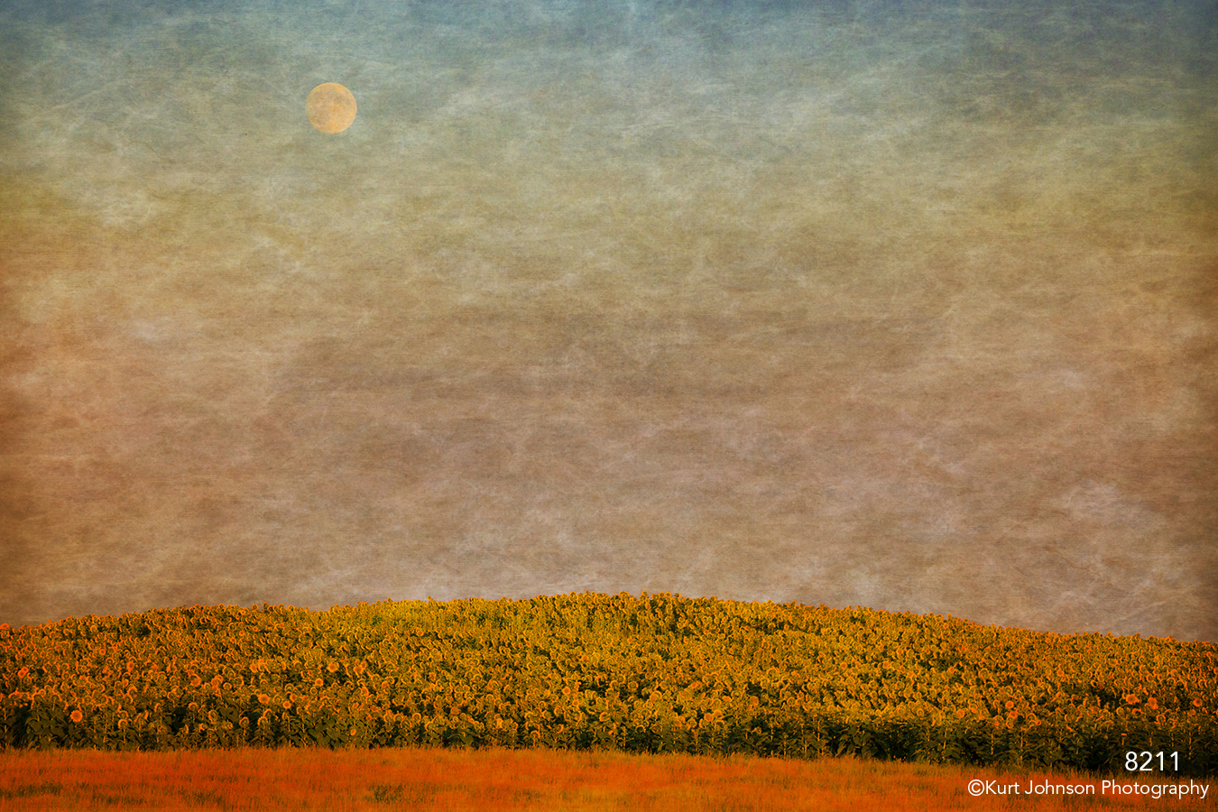 interpretations interpretation filter landscape sunset flowers sunflowers rural