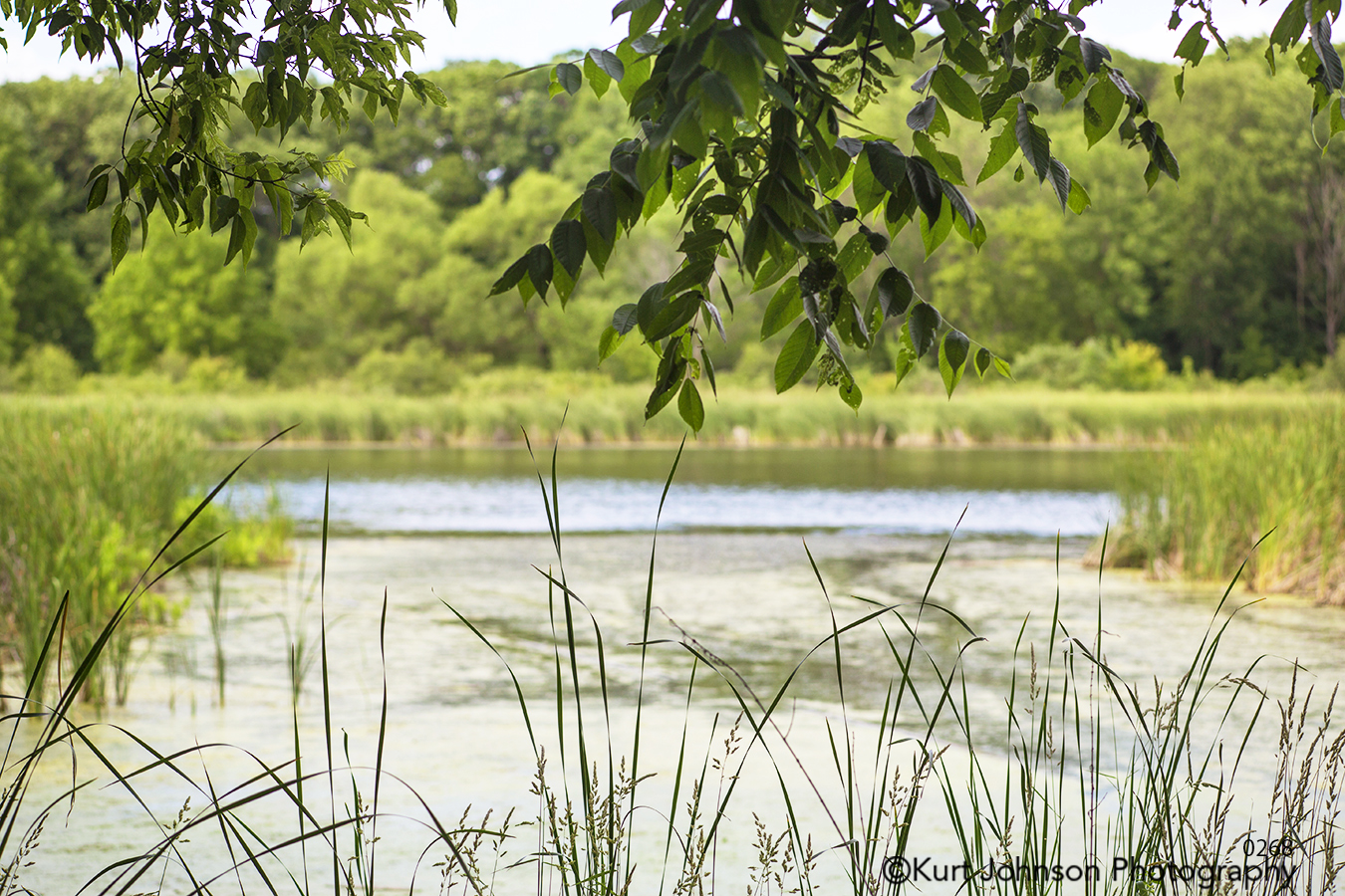 waterscape landscape green grasses trees pond lake