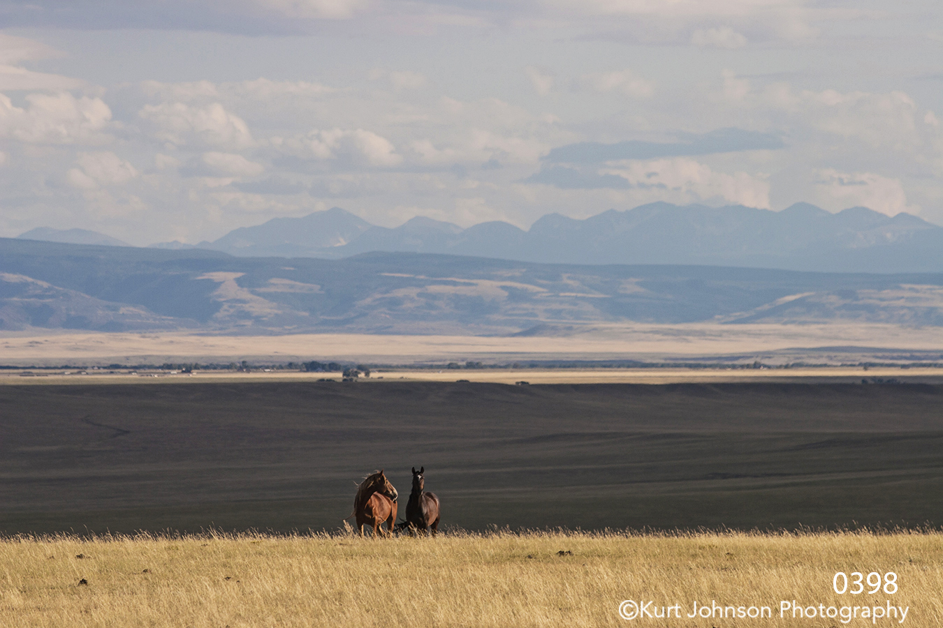 landscape mountains wildlife horses grasses