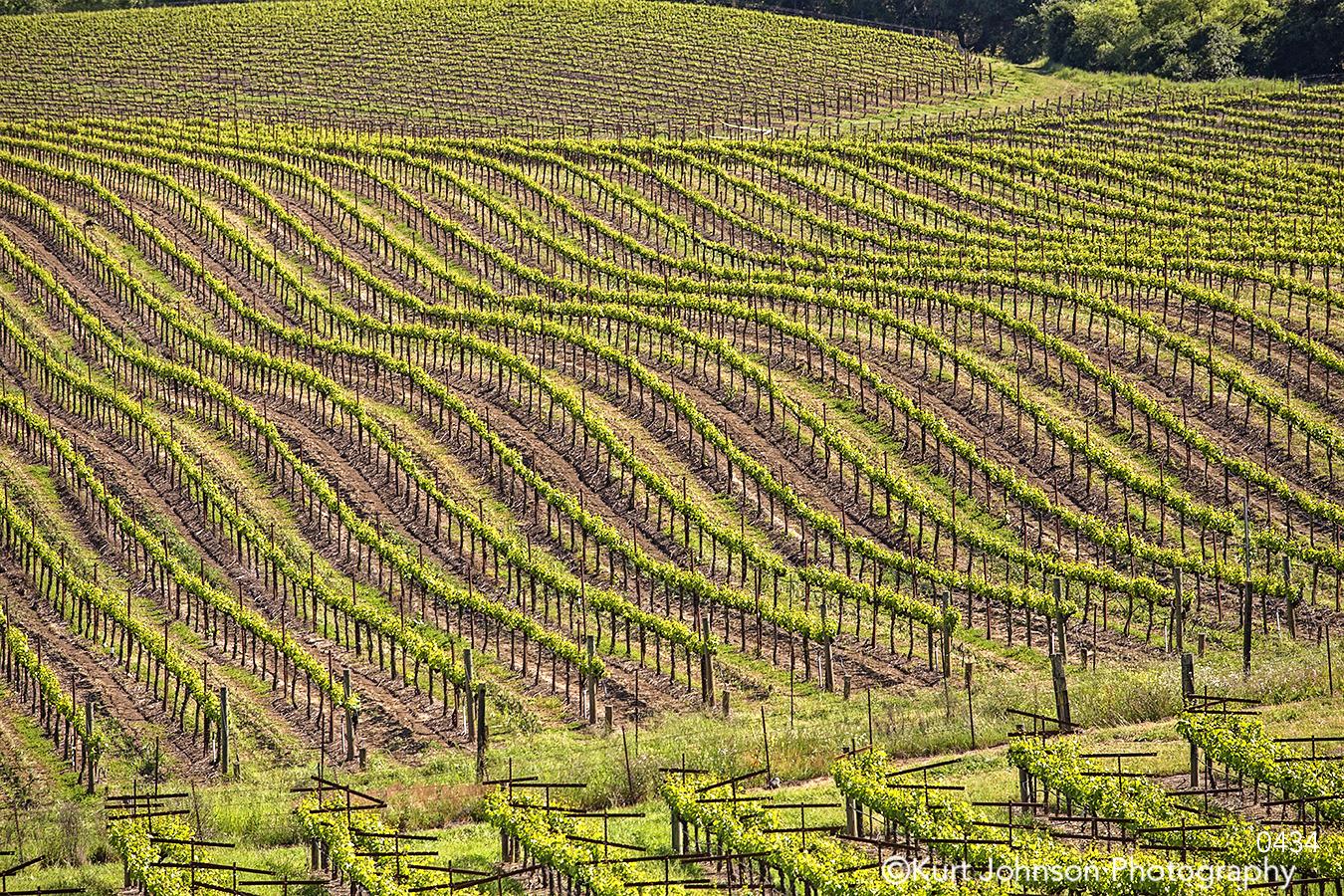 landscape grasses winery vines california