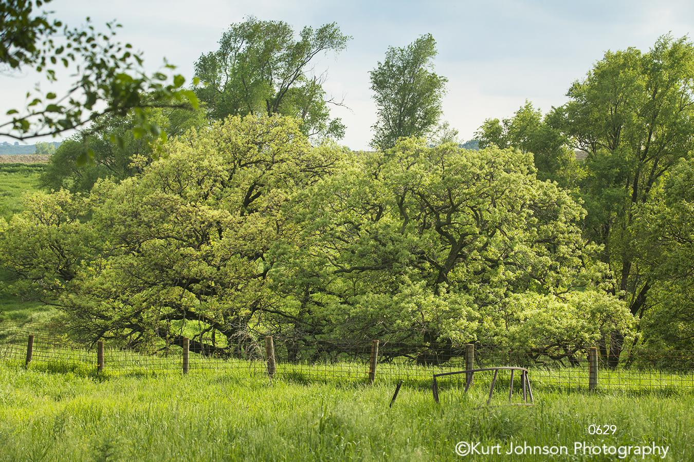 landscape trees grasses green rural