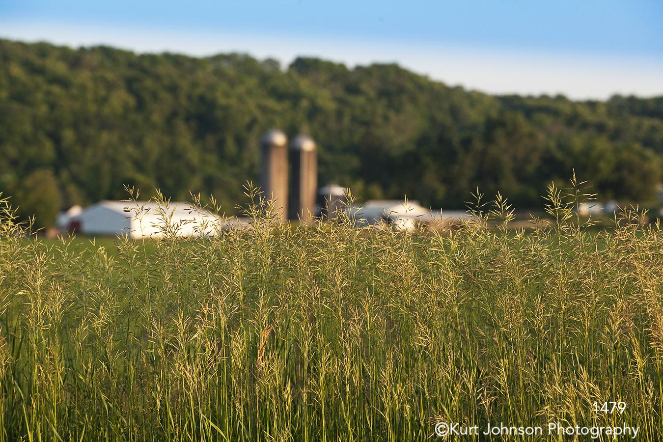landscape grasses farm midwest