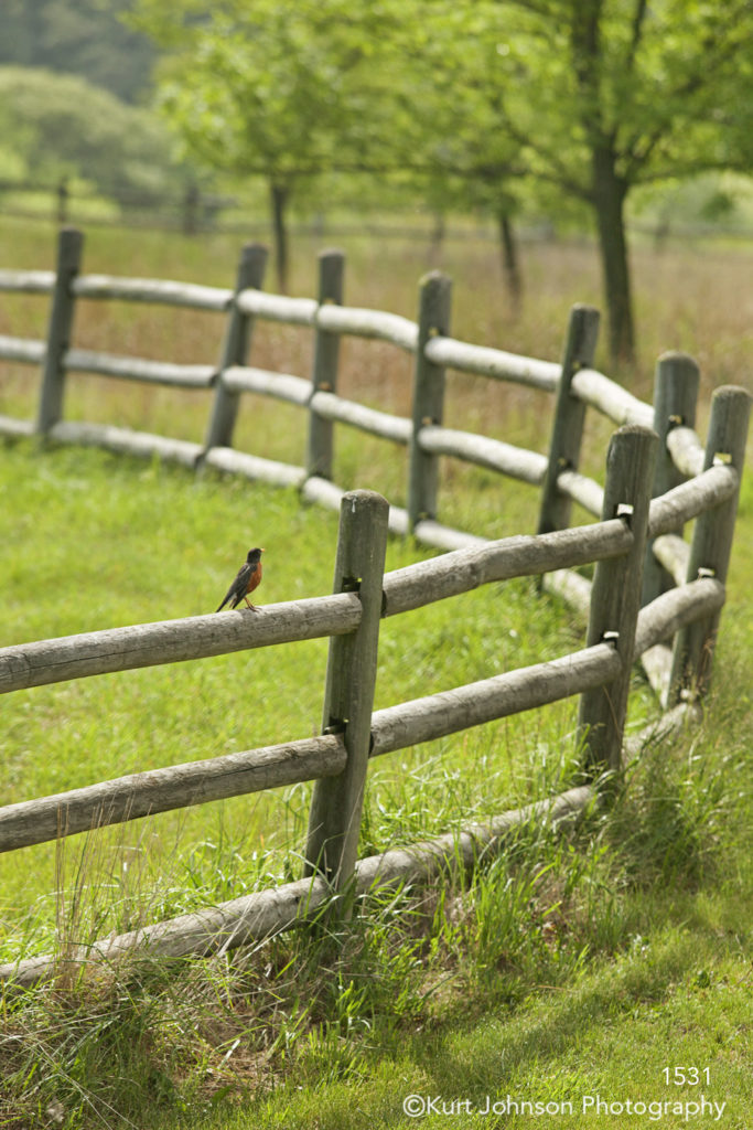 wildlife landscape fence grasses bird robin green