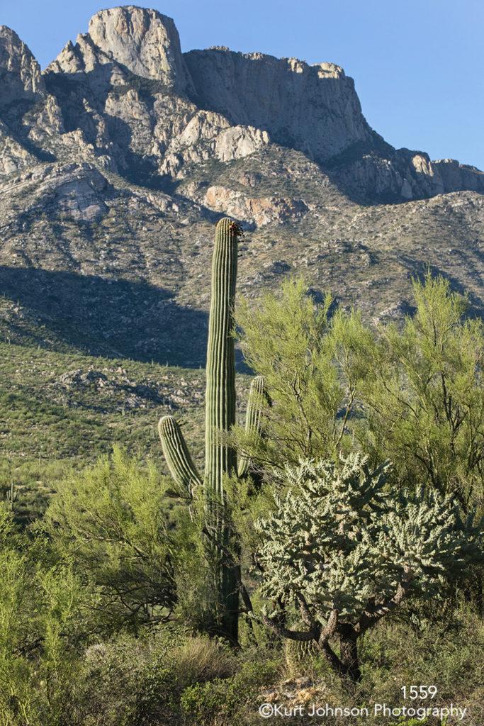 landscape desert mountains cactus