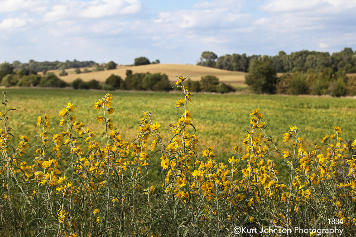 landscape flowers yellow field trees midwest