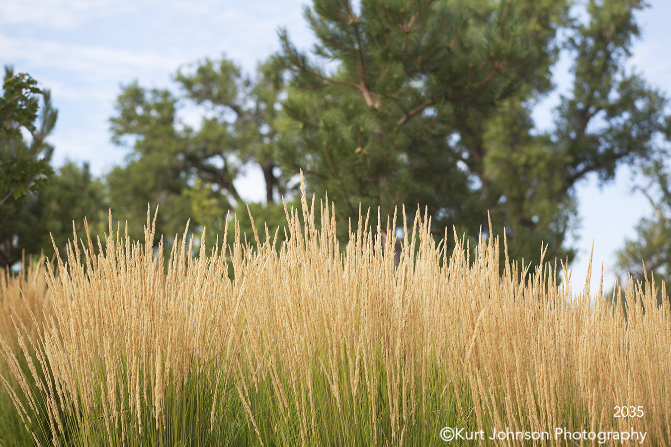grasses landscape green trees